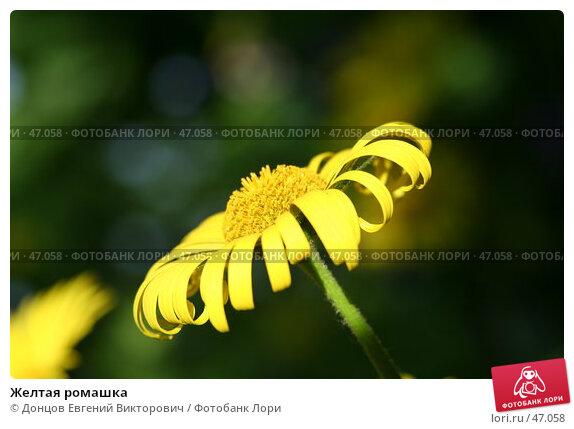 Желтая ромашка, фото № 47058, снято 26 мая 2007 г. (c) Донцов Евгений Викторович / Фотобанк Лори
