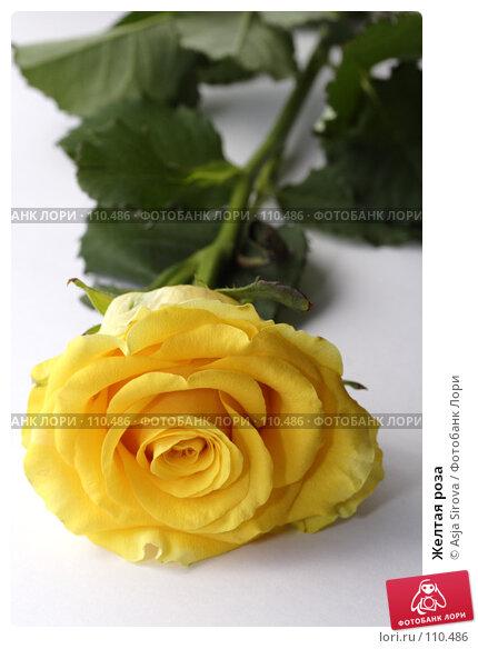 Желтая роза, фото № 110486, снято 17 июня 2007 г. (c) Asja Sirova / Фотобанк Лори