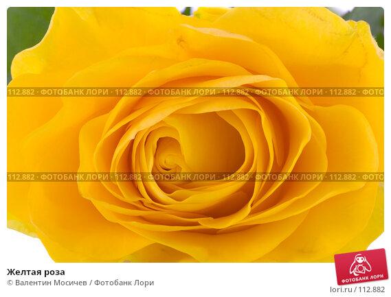 Желтая роза, фото № 112882, снято 16 февраля 2007 г. (c) Валентин Мосичев / Фотобанк Лори