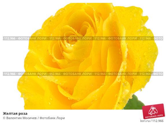 Желтая роза, фото № 112966, снято 16 февраля 2007 г. (c) Валентин Мосичев / Фотобанк Лори