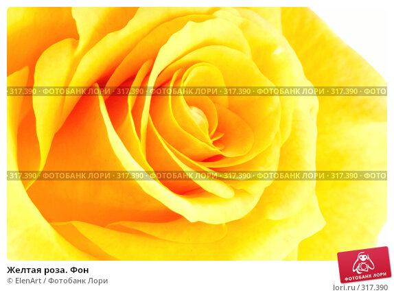 Купить «Желтая роза. Фон», фото № 317390, снято 11 декабря 2017 г. (c) ElenArt / Фотобанк Лори