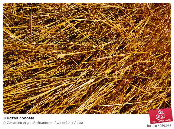 Желтая солома, фото № 269066, снято 18 сентября 2006 г. (c) Селигеев Андрей Иванович / Фотобанк Лори