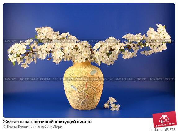 Желтая ваза с веточкой цветущей вишни, фото № 165378, снято 13 мая 2007 г. (c) Елена Блохина / Фотобанк Лори