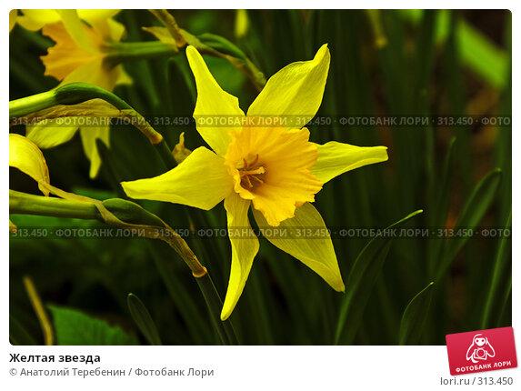Желтая звезда, фото № 313450, снято 2 мая 2008 г. (c) Анатолий Теребенин / Фотобанк Лори