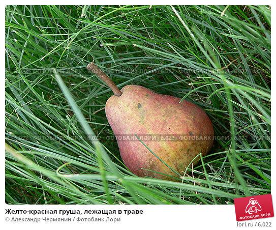 Желто-красная груша, лежащая в траве, фото № 6022, снято 17 августа 2005 г. (c) Александр Чермянин / Фотобанк Лори