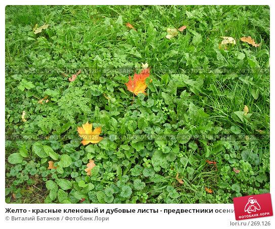 Купить «Желто - красные кленовый и дубовые листы - предвестники осени на зеленой траве», фото № 269126, снято 21 сентября 2007 г. (c) Виталий Батанов / Фотобанк Лори