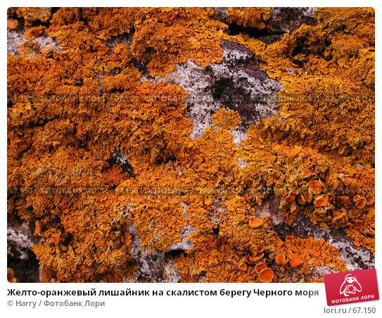 Желто-оранжевый лишайник на скалистом берегу Черного моря, фото № 67150, снято 30 июля 2004 г. (c) Harry / Фотобанк Лори