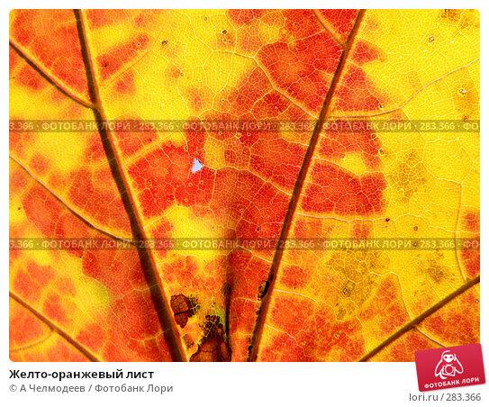 Желто-оранжевый лист, фото № 283366, снято 20 октября 2007 г. (c) A Челмодеев / Фотобанк Лори