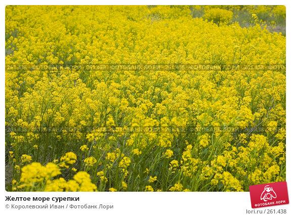 Желтое море сурепки, фото № 261438, снято 20 апреля 2008 г. (c) Королевский Иван / Фотобанк Лори