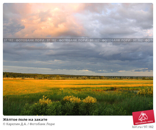 Купить «Жёлтое поле на закате», фото № 97182, снято 21 июня 2007 г. (c) Карелин Д.А. / Фотобанк Лори