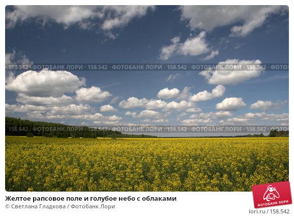 Купить «Желтое рапсовое поле и голубое небо с облаками», фото № 158542, снято 3 июня 2006 г. (c) Cветлана Гладкова / Фотобанк Лори