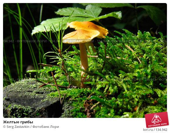 Желтые грибы, фото № 134942, снято 23 июля 2005 г. (c) Serg Zastavkin / Фотобанк Лори