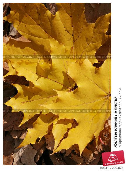 Желтые кленовые листья, фото № 209074, снято 7 октября 2007 г. (c) Архипова Мария / Фотобанк Лори