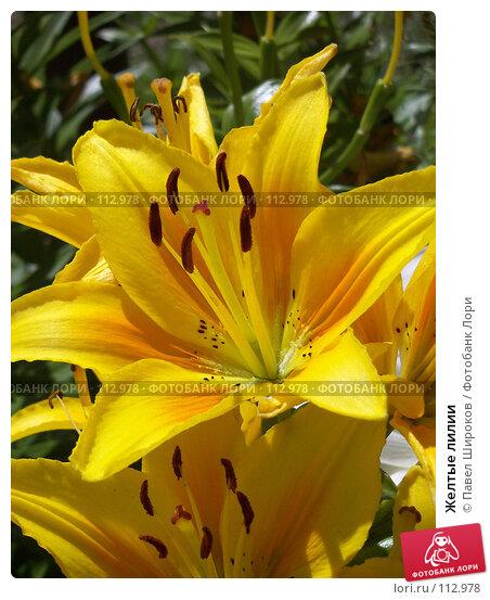 Желтые лилии, эксклюзивное фото № 112978, снято 27 октября 2016 г. (c) Павел Широков / Фотобанк Лори