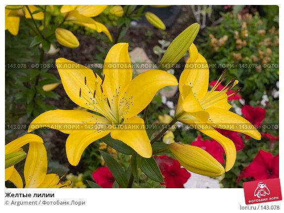 Желтые лилии, фото № 143078, снято 6 июля 2006 г. (c) Argument / Фотобанк Лори