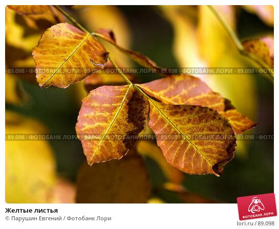 Желтые листья, фото № 89098, снято 23 февраля 2017 г. (c) Парушин Евгений / Фотобанк Лори