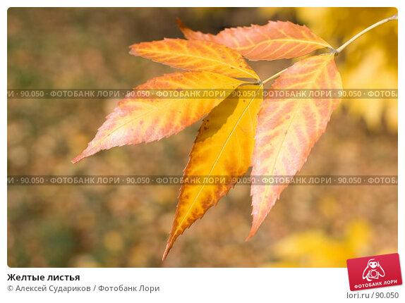 Желтые листья, фото № 90050, снято 29 сентября 2007 г. (c) Алексей Судариков / Фотобанк Лори