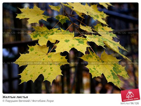 Желтые листья, фото № 96126, снято 27 июня 2017 г. (c) Парушин Евгений / Фотобанк Лори