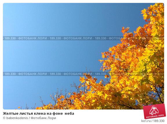 Купить «Желтые листья клена на фоне  неба», фото № 189330, снято 24 сентября 2006 г. (c) Бабенко Денис Юрьевич / Фотобанк Лори
