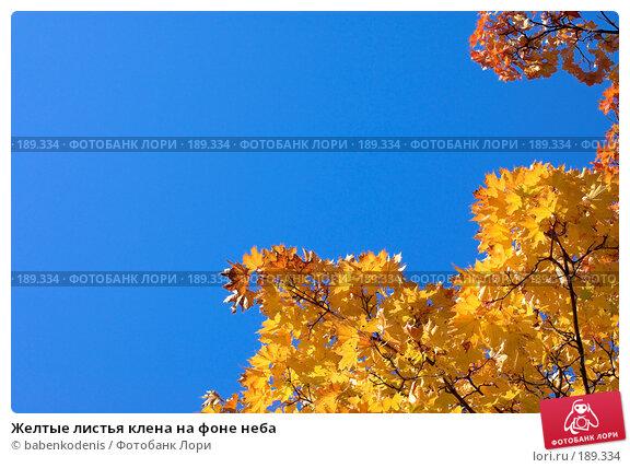 Купить «Желтые листья клена на фоне неба», фото № 189334, снято 24 сентября 2006 г. (c) Бабенко Денис Юрьевич / Фотобанк Лори