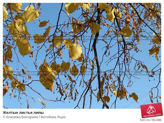 Желтые листья липы, фото № 92046, снято 29 сентября 2007 г. (c) Елисеева Екатерина / Фотобанк Лори