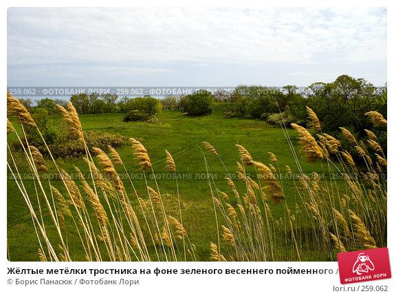 Жёлтые метёлки тростника на фоне зеленого весеннего пойменного луга, фото № 259062, снято 19 апреля 2008 г. (c) Борис Панасюк / Фотобанк Лори