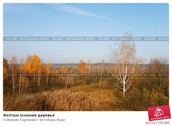 Купить «Желтые осенние деревья», фото № 155498, снято 31 октября 2004 г. (c) Максим Горпенюк / Фотобанк Лори