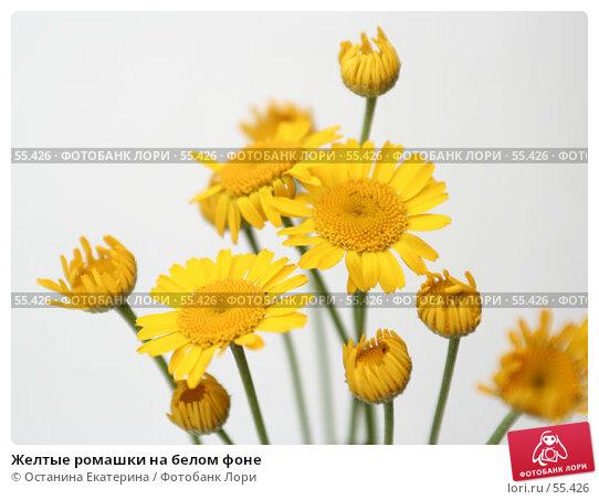 Желтые ромашки на белом фоне, фото № 55426, снято 22 июня 2007 г. (c) Останина Екатерина / Фотобанк Лори