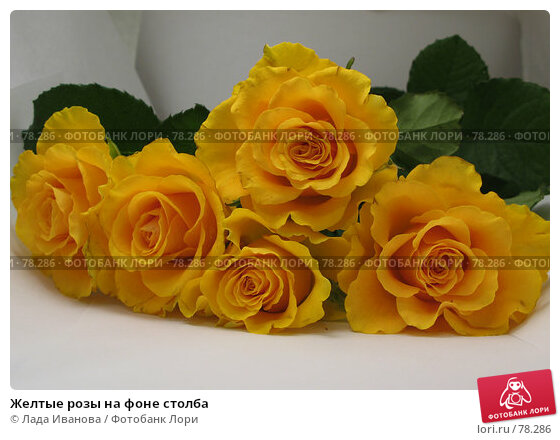Желтые розы на фоне столба, фото № 78286, снято 1 сентября 2007 г. (c) Лада Иванова / Фотобанк Лори