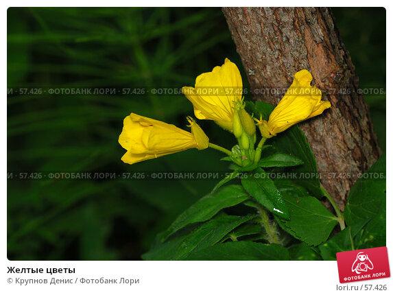 Желтые цветы, фото № 57426, снято 30 мая 2007 г. (c) Крупнов Денис / Фотобанк Лори