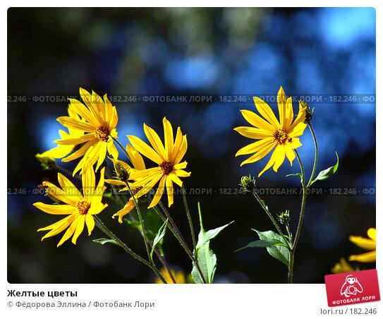 Желтые цветы, фото № 182246, снято 27 октября 2016 г. (c) Фёдорова Эллина / Фотобанк Лори