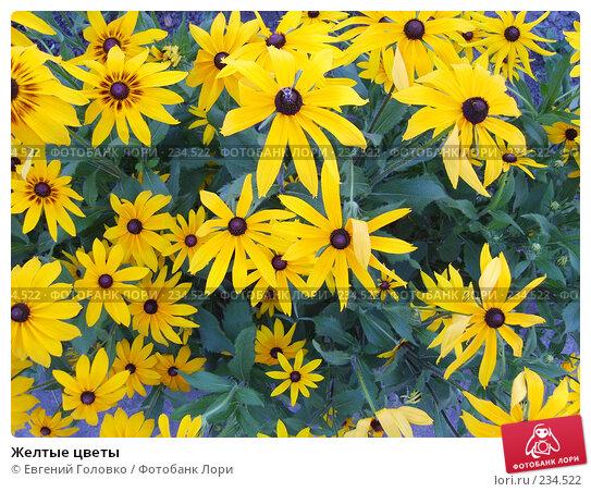 Желтые цветы, фото № 234522, снято 1 июля 2007 г. (c) Евгений Головко / Фотобанк Лори