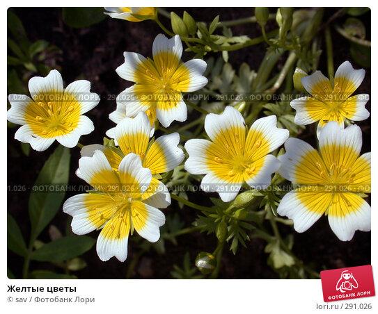 Купить «Желтые цветы», фото № 291026, снято 24 июля 2007 г. (c) sav / Фотобанк Лори