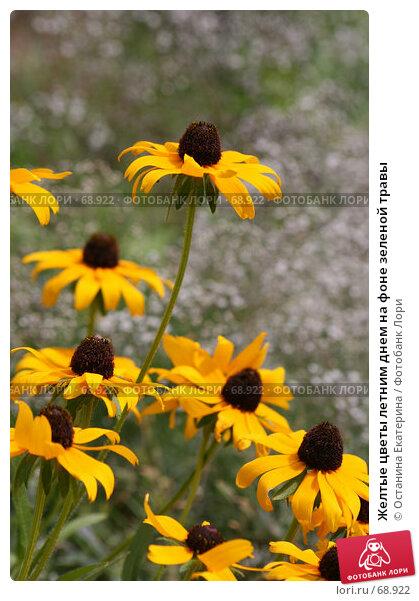 Желтые цветы летним днем на фоне зеленой травы, фото № 68922, снято 24 июля 2007 г. (c) Останина Екатерина / Фотобанк Лори