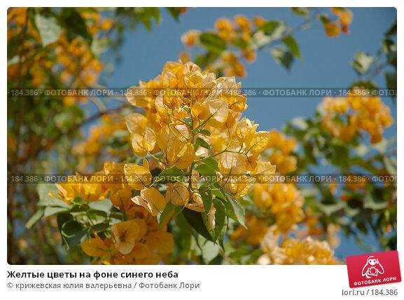 Желтые цветы на фоне синего неба, фото № 184386, снято 26 декабря 2007 г. (c) крижевская юлия валерьевна / Фотобанк Лори