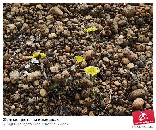 Желтые цветы на камешках, фото № 155682, снято 28 июня 2017 г. (c) Вадим Кондратенков / Фотобанк Лори