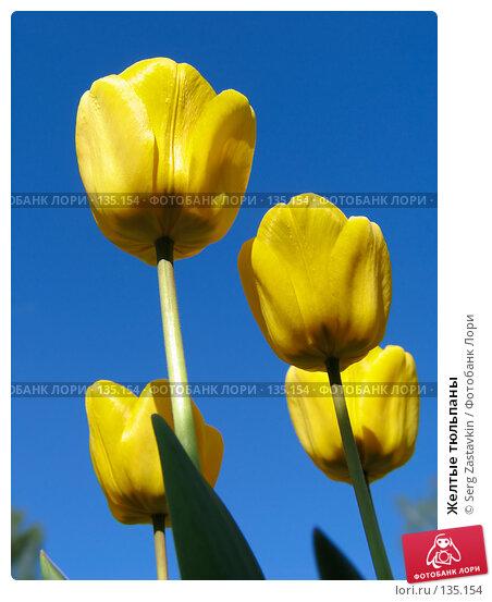 Желтые тюльпаны, фото № 135154, снято 20 мая 2005 г. (c) Serg Zastavkin / Фотобанк Лори