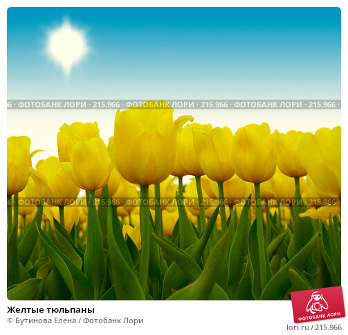 Купить «Желтые тюльпаны», фото № 215966, снято 22 мая 2007 г. (c) Бутинова Елена / Фотобанк Лори