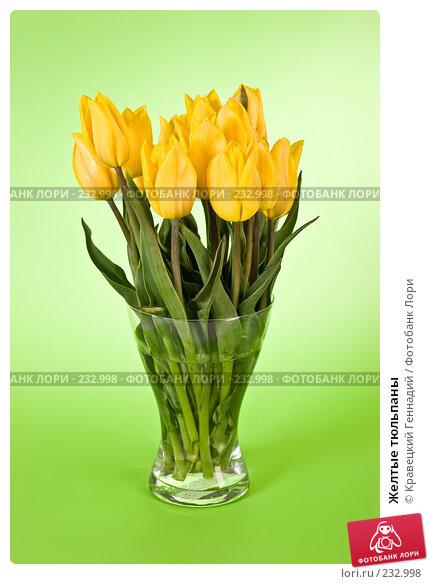 Желтые тюльпаны, фото № 232998, снято 9 мая 2005 г. (c) Кравецкий Геннадий / Фотобанк Лори