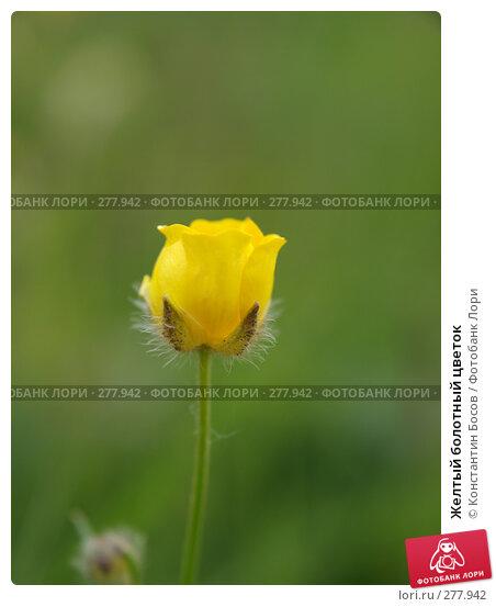 Желтый болотный цветок, фото № 277942, снято 24 февраля 2017 г. (c) Константин Босов / Фотобанк Лори