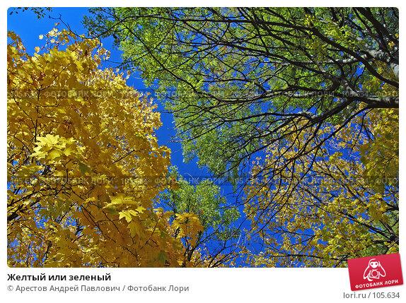 Желтый или зеленый, фото № 105634, снято 20 октября 2007 г. (c) Арестов Андрей Павлович / Фотобанк Лори