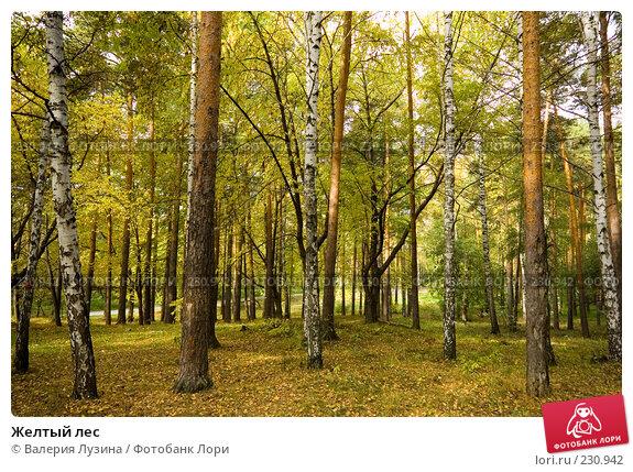 Желтый лес, фото № 230942, снято 22 сентября 2007 г. (c) Валерия Потапова / Фотобанк Лори