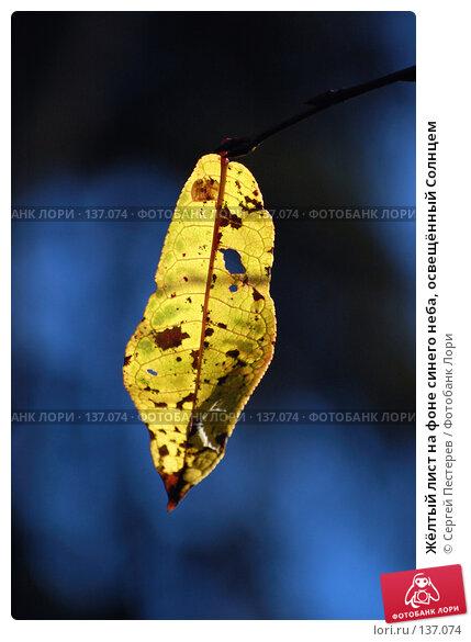 Жёлтый лист на фоне синего неба, освещённый Солнцем, фото № 137074, снято 22 сентября 2007 г. (c) Сергей Пестерев / Фотобанк Лори