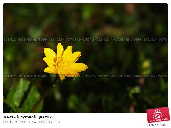 Желтый луговой цветок, фото № 321022, снято 26 апреля 2008 г. (c) Sergey Toronto / Фотобанк Лори