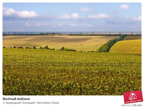Купить «Желтый пейзаж», фото № 228434, снято 3 сентября 2005 г. (c) Кравецкий Геннадий / Фотобанк Лори