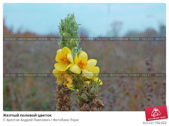 Желтый полевой цветок, фото № 102622, снято 21 октября 2016 г. (c) Арестов Андрей Павлович / Фотобанк Лори