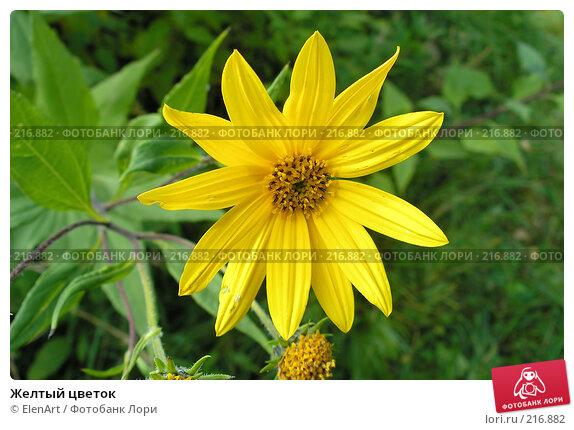 Желтый цветок, фото № 216882, снято 24 сентября 2017 г. (c) ElenArt / Фотобанк Лори