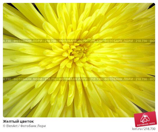 Желтый цветок, фото № 218730, снято 28 марта 2017 г. (c) ElenArt / Фотобанк Лори