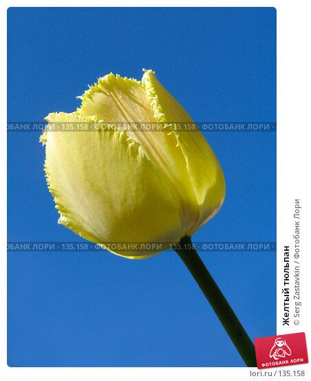Желтый тюльпан, фото № 135158, снято 20 мая 2005 г. (c) Serg Zastavkin / Фотобанк Лори