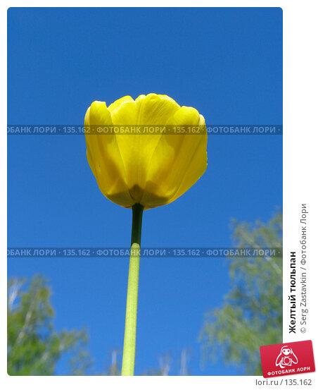Желтый тюльпан, фото № 135162, снято 20 мая 2005 г. (c) Serg Zastavkin / Фотобанк Лори